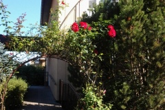 zahrada Říhova